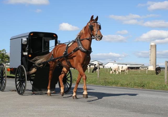 Journée découverte dans un village Amish – excursion au départ de Philadelphie - Philadelphie - Ceetiz