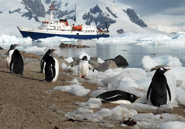 Croisière en Antarctique au départ d'Ushuaia : 11 jours / 10 nuits dans la péninsule Antarctique et  les îles Shetland du Sud image 31