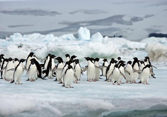 Croisière en Antarctique au départ d'Ushuaia : 11 jours / 10 nuits dans la péninsule Antarctique et  les îles Shetland du Sud image 4