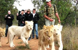 Tour with the lions