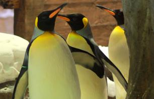 Penguin Encounter at the Mall of the Emirates in Dubai