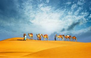 Visit the Emirates in 8 Days: Dubai, Abu Dhabi, Al Ain, Sharjah, and the Musandam Fjords - Roundtrip Transport from Dubai