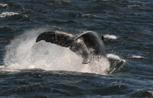 Whale-Watching Cruise on the Rivière-du-Loup – Leaving from Montreal