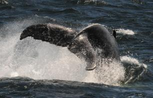 Whale observation cruise in the fjords - in Tadoussac & Baie-Sainte-Catherine