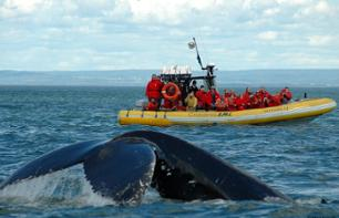 Whale-Watching Boat Cruise – Departing from Baie Sainte Catherine