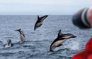Whale and dolphin cruise off the coast of Auckland