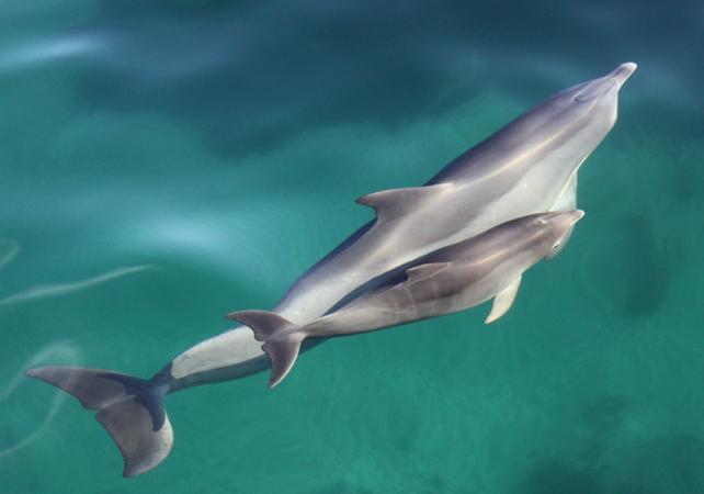 Rencontre avec les dauphins : croisière d'observation et/ou nage en milieu naturel - Au départ d'Adélaïde image 1