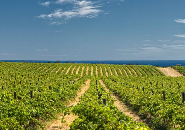 Excursion d'une journée à la découverte des vins de McLaren Vale : 5 dégustations – Au départ d'Adélaïde image 1