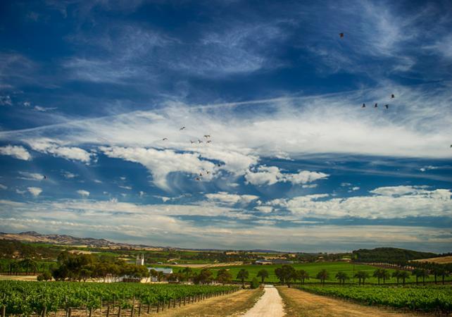 Excursion d'une journée dans la vallée de Barossa et dégustations de vins – Au départ d'Adélaïde image 2