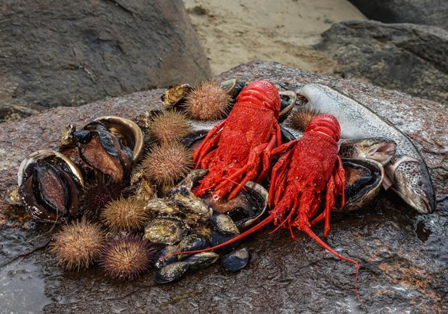 Croisière VIP en petit groupe autour de l'île Bruny : pêche et dégustation de produits de la mer – Au départ de Hobart image 6