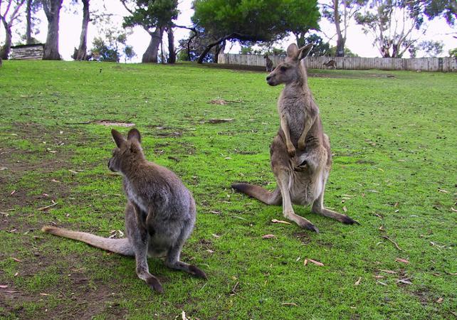 Découverte de Hobart et ses alentours : centre-ville, Mont Wellington, Richmond, Bonorong Center et jardin botanique image 8