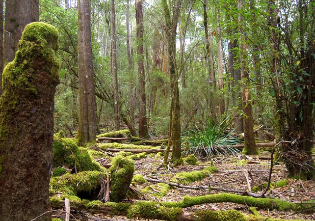 Excursion jusqu'aux Chutes Russell, dans le parc national du mont Field – Au départ de Hobart image 3