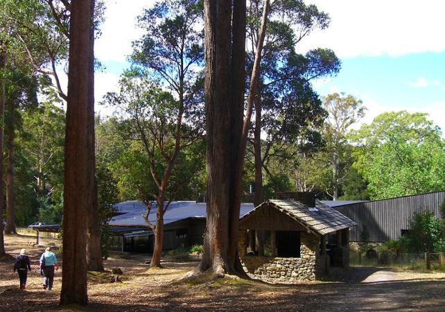 Excursion jusqu'aux Chutes Russell, dans le parc national du mont Field – Au départ de Hobart image 4