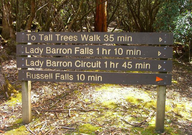 Excursion jusqu'aux Chutes Russell, dans le parc national du mont Field – Au départ de Hobart image 5