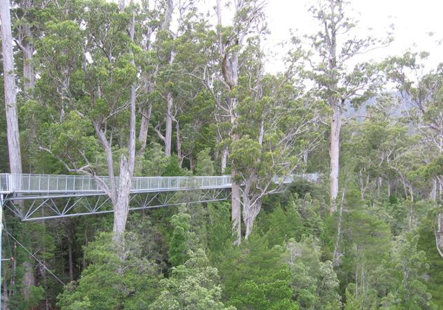 Excursion au parc national des Hastings Caves avec accès à la Tahune Airwalk – Au départ de Hobart image 7
