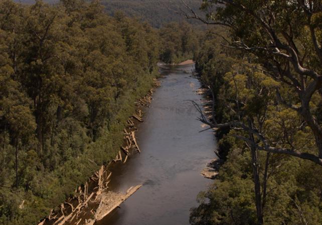 Excursion au parc national des Hastings Caves avec accès à la Tahune Airwalk – Au départ de Hobart image 8