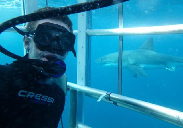 Rencontre avec le grand requin blanc : croisière d'observation et/ou plongée en cage en milieu naturel - Au départ de Port Lincoln image 4