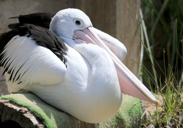 Billet Zoo de Melbourne image 6