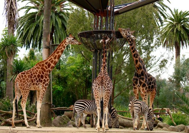 Billet Zoo de Melbourne image 3