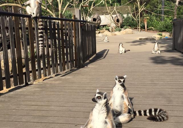 Billet Zoo de Melbourne image 4