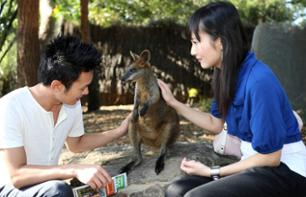 VIP tour of Taronga Zoo: behind the scenes tour + guided tour + Skyline Safari + photo with a koala + feed the wallabies
