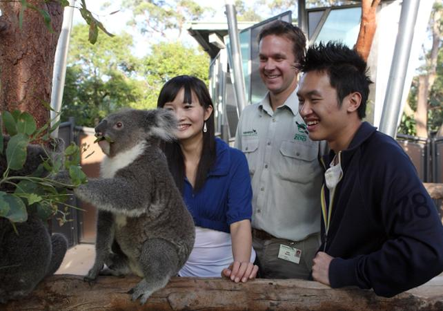 Visite VIP du Taronga Zoo : accès aux coulisses + visite guidée + Skyline Safari + photo avec un koala + nutrition des wallabies image 3