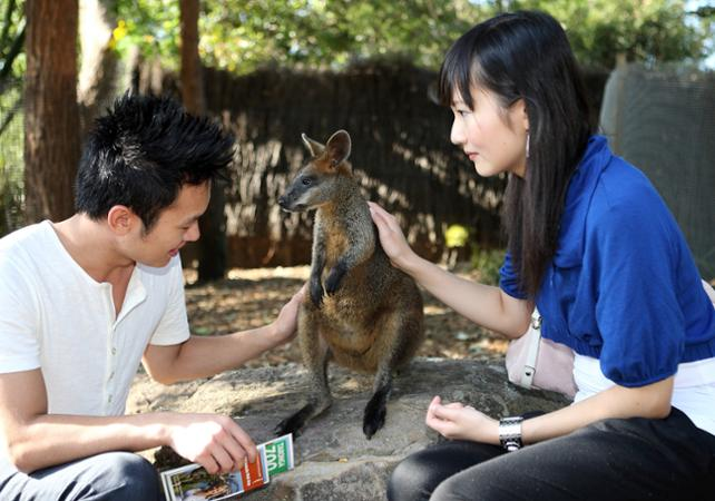 Visite VIP du Taronga Zoo : accès aux coulisses + visite guidée + Skyline Safari + photo avec un koala + nutrition des wallabies image 1