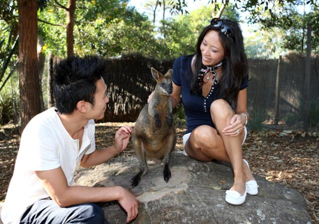 Visite VIP du Taronga Zoo : accès aux coulisses + visite guidée + Skyline Safari + photo avec un koala + nutrition des wallabies image 9