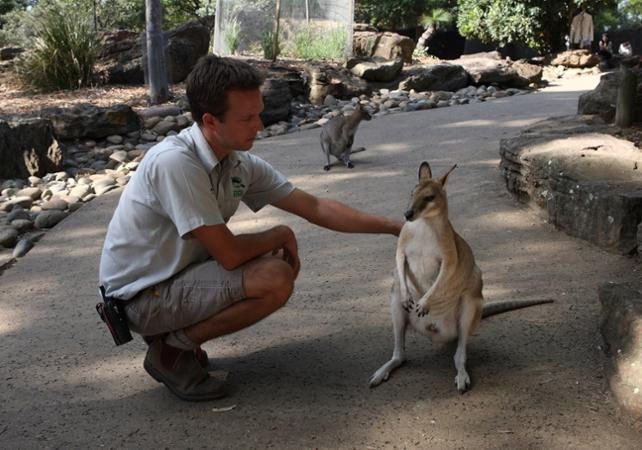 Visite VIP du Taronga Zoo : accès aux coulisses + visite guidée + Skyline Safari + photo avec un koala + nutrition des wallabies image 10