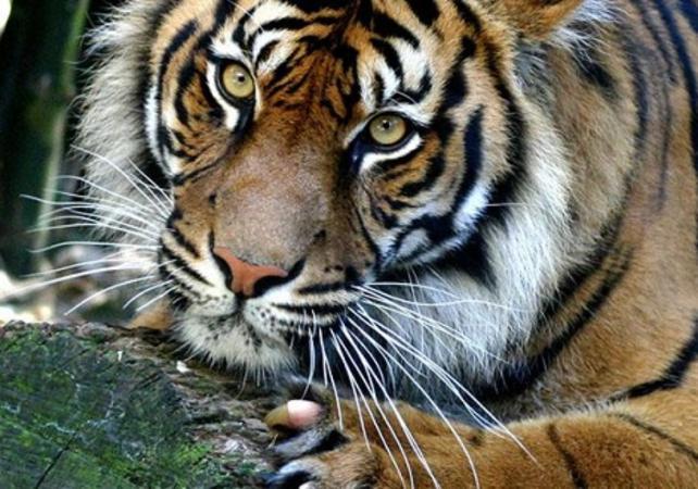 Billet Taronga Zoo - Sydney image 1