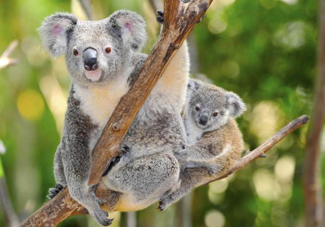 Excursion dans la nature à la découverte des animaux d'Australie: kangourous, koalas, ornithorynques, émeus et wombats! image 2