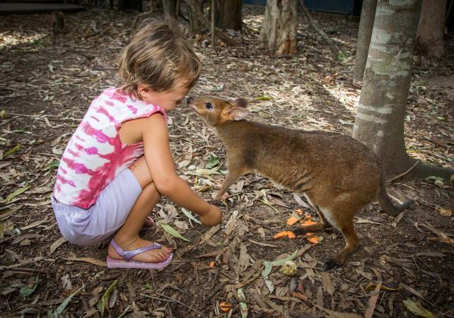 Visite de la ferme aux crocodiles Hartley – Au départ de Cairns image 4