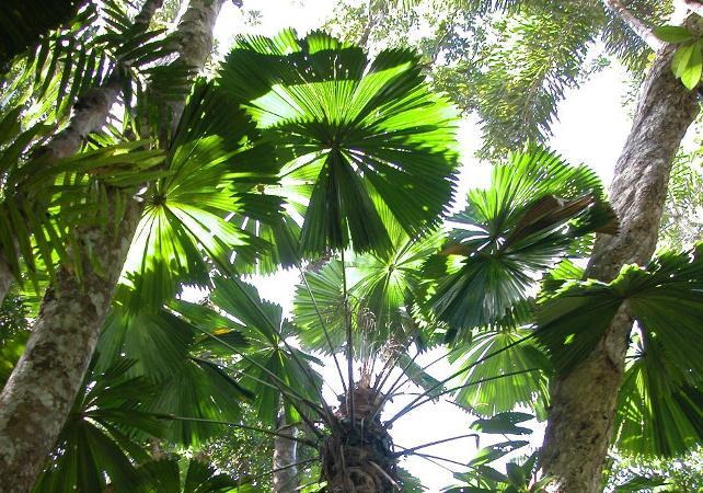 Excursion au parc national de Daintree et à Cooktown au départ de Cairns – retour en avion en option image 2
