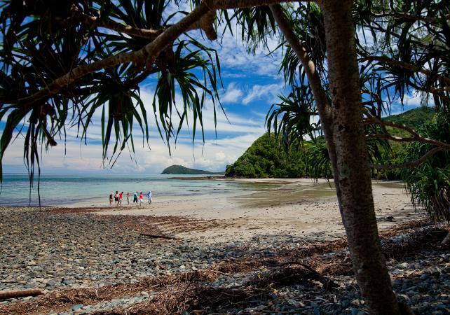 Excursion au parc national de Daintree et à Cape Tribulation – Au départ de Cairns image 4