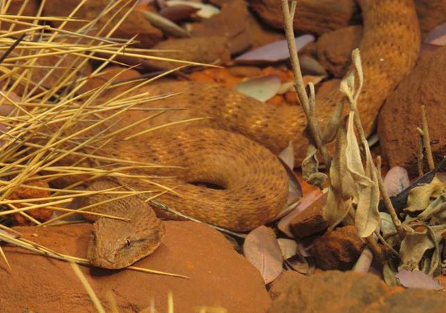 Ticket d'entrée au Alice Springs Desert Park image 2
