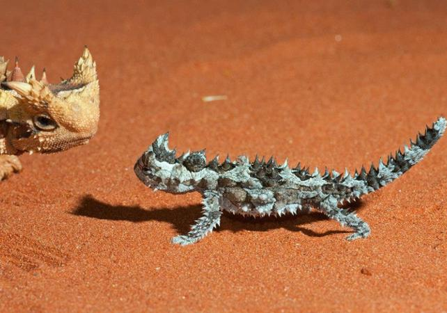 Ticket d'entrée au Alice Springs Desert Park image 4