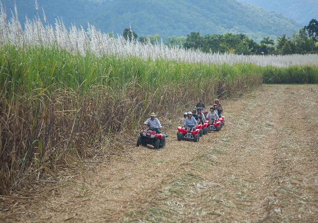 Balade en quad dans la forêt tropicale – au départ de Cairns image 2