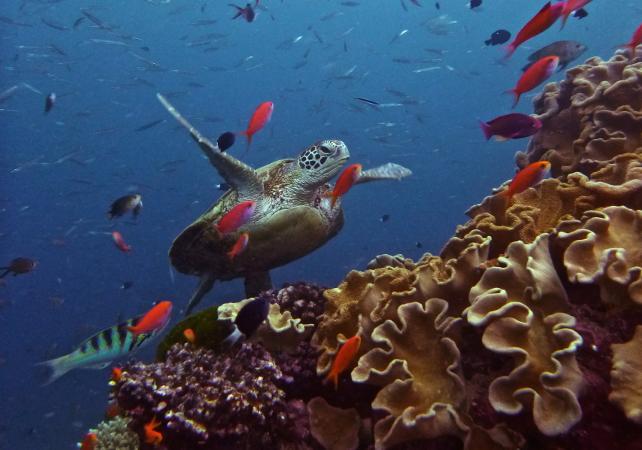 Plongée sous-marine à la Grande Barrière de Corail – Au départ de Cairns image 2