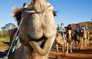 Camel Ride in the MacDonnell Ranges – Departing from Alice Springs