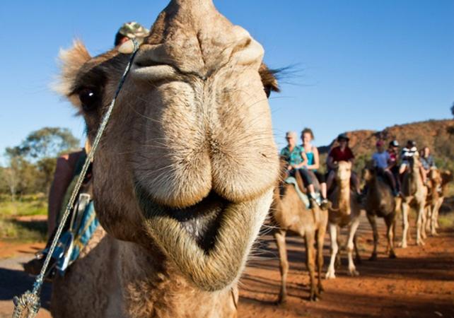 Balade à dos de chameau dans les Monts MacDonnell – Au départ d'Alice Springs image 1