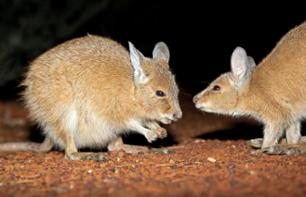Alice Springs Desert Park: Night-time guided tour in search of rare or endangered animals