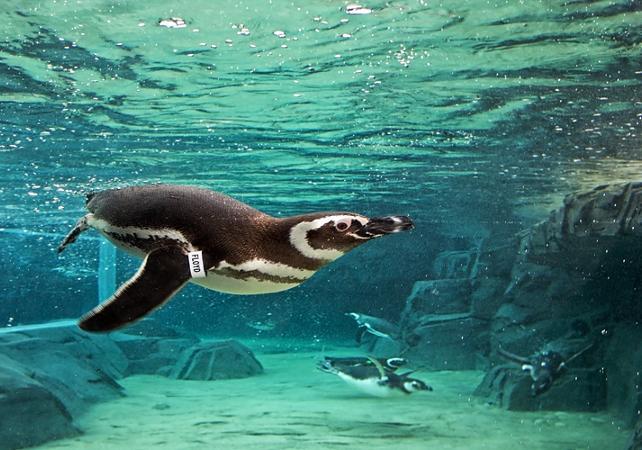 Billet coupe-file Aquarium du Pacifique - Long Beach (sud de Los Angeles) - Los Angeles - Ceetiz