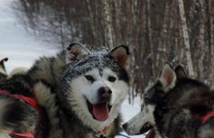 Dog-Sledding Excursion – Half-day trip (approx. 2hrs 30 mins from Montreal and 3hrs 30 mins from Quebec)