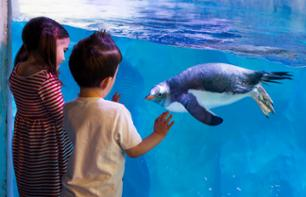 Skip-the-Line Tickets to London Aquarium Sea life