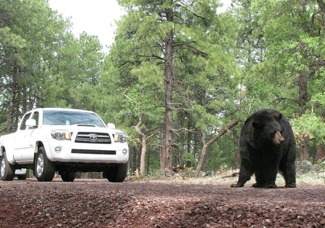 Billet Bearizona - Parc safari à Williams (à proximité du Grand canyon South Rim) - Las Vegas -