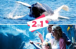 2-in1 Offer: Whale-Watching Cruise + Ticket for the New England Aquarium, Boston