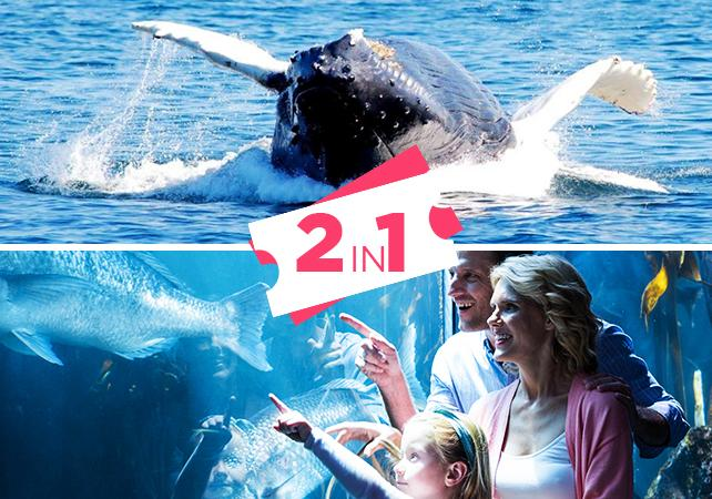 Sightseeing cruises 2 in1 offer whale watching cruise New england aquarium tickets