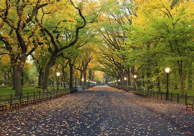 Ver la ciudad,City tours,Visitas en bici,Bike tours,Visitas en segway,Segway tours,Tour Central Park,Central Park,Bicicleta
