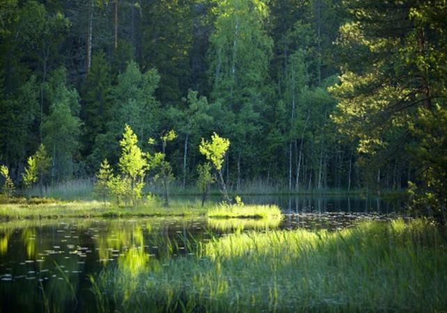 Randonnée d'une journée au Parc National de Nuuksio - Helsinki -