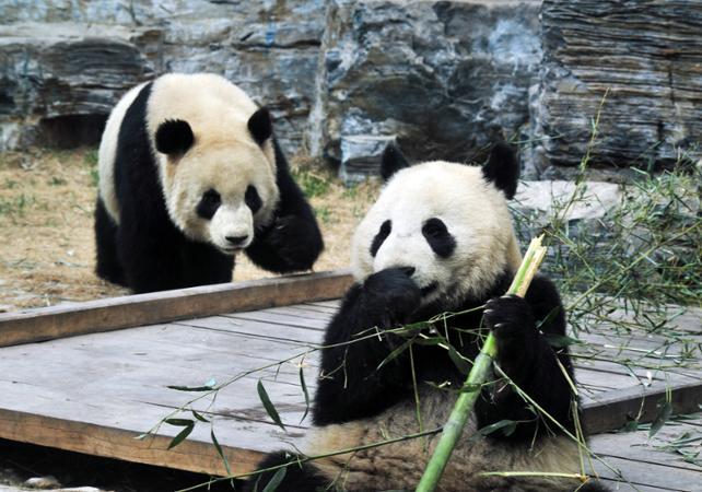 Visite privée du Zoo de Pékin, du Palais d'Eté et des Hutongs –départ/retour hôtel - Pekin -
